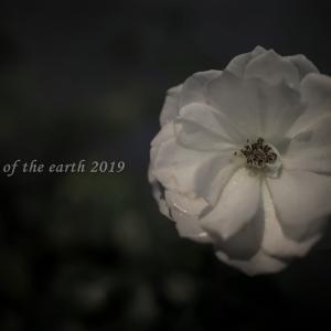 人知れず咲く自由が丘の花 CANON EOS RP RF35mmF1.8