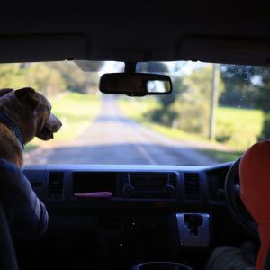 ブリスベンの犬 オーストラリアの風景写真/Australia landscape
