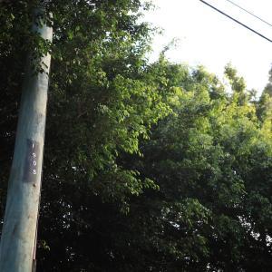 古い電柱 オーストラリアの風景写真/Australia landscape photography
