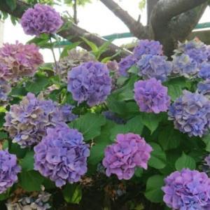 2019.7.5  道に咲いてるお花 1