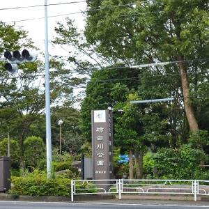 静岡県三島市 大勝軒みしま デラックスつけ麺