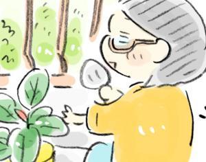 【日常】ベランダでプチ園芸!100均ゴムの木の鉢替え