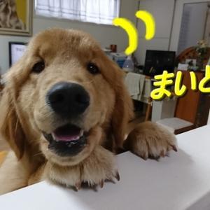 犬生初の雪遊び ☆