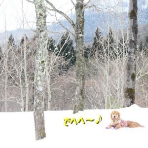 雪中ラッセル