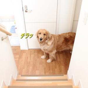 階段上るとサプライズ ☆