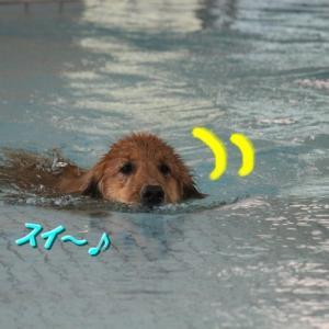 水際のデッドヒート!