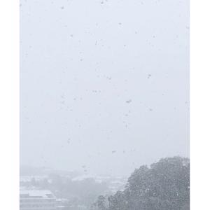 大雪とテレワークと…