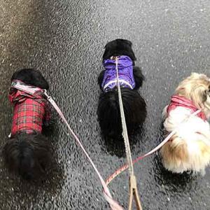 雨の散歩は最悪・・・。
