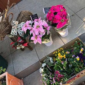冬の花たちをゲット!