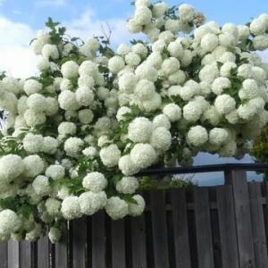 魅惑の白い花…北斗市・ファース本部