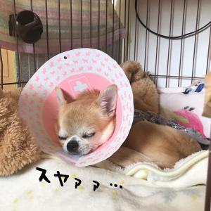 手術後の経過と1月の負傷の話