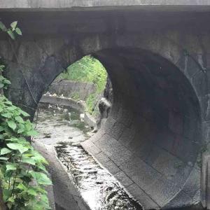 京都市・伏水街道第四橋