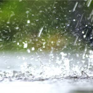 【短歌日記】突然の 雨にたたられ ぬれねずみ 長引く梅雨に 恨みつらつら /// 午後から予定していた野外の行動も中止に。