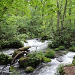 【短歌日記】水しぶき はねつつ苔を 下りゆく 奥入瀬渓流 視ながら涼む /// あまりの暑さに、インターネットテレビで涼みました。