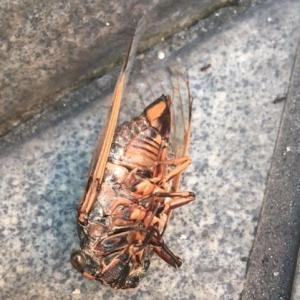【短歌日記】数日の みじかき命 全うし 躯をさらす 蝉に合掌 /// 道のあちこちに蝉の亡骸が…。盆なれば、せめてもと思い合掌しました。