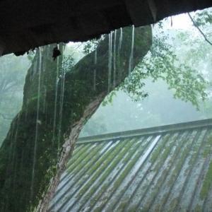 【短歌日記】久方に にわか雨降り ほっとする 猛暑に乾く 大地に恵み /// 1か月以上雨の降っていない岡山市で、昨日まとまった量の、にわか雨が降ってくれました。