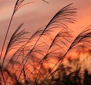 【短歌日記】日中は 未だ残暑は きびしくも 日陰に居れば 秋風涼し /// しかし菅新総裁の誕生菅新総裁のもとで吹く風はさらに冷たく…。