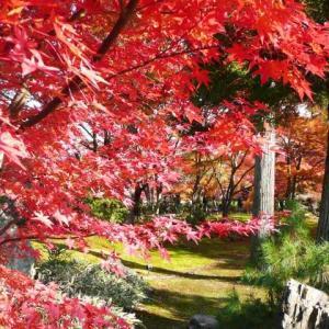 【短歌日記】焼そばの ソース香れる 夕餉時 紅葉の庭の ニュース流れて /// だんだんと夕食も温かい鉄板焼きや鍋が食べたくなる季節です。