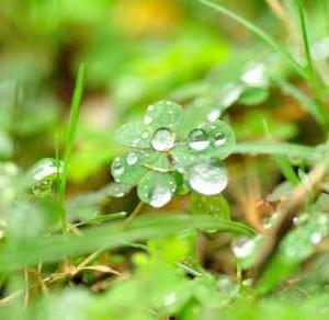 【短歌日記】春なれば 「濡れていこう」と 気取れても 氷雨邪魔する 今日の道行き /// 不「不要」不「不急」の予定があるのに、あいにくの雨…。  ///