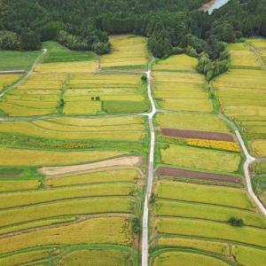 【短歌日記】さながらに パッチワークを 見る如く 眼下に開く 秋のパノラマ /// 高台から見下ろすと、縦横に整然と走る稲穂、野菜畑。さながらパッチワークを見ているようです。