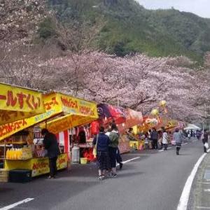 今日は桜祭り
