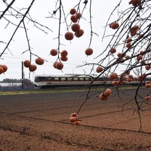 12月2日撮影 雨の中の柿と「WVしなの」
