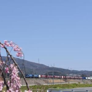 4月25日撮影 東線貨物2083レより