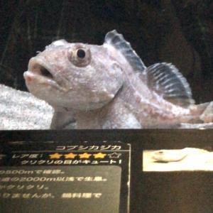 環境水族館「アクアマリンふくしま」に行ってきました!