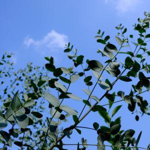庭仕事と帯留め作り