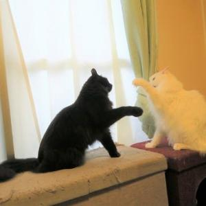 猫達の様子