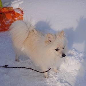 再掲載 迷い犬を捜索中 #拡散希望