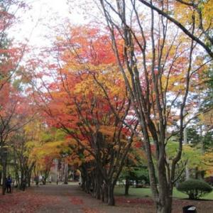 「香雪園の紅葉」