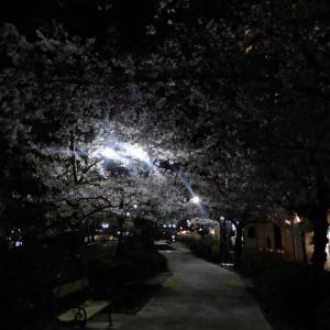 621.宝塚はなのみち夜桜散歩2020