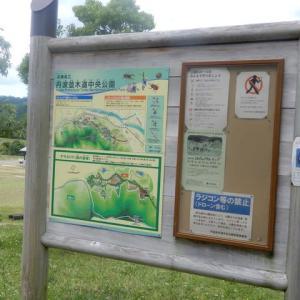 628.笹山並木道公園2020