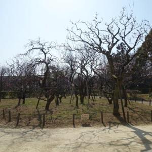 649.甲東梅林と、甲山森林公園の梅林