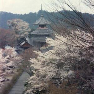 656.30年前の吉野山桜まつり