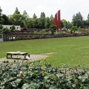 668.伊丹市荒巻バラ公園2021
