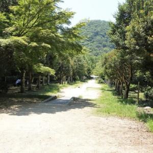 670.甲山森林公園2021年夏と、アジサイの花
