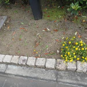 【24日22時までの限定公開記事】 庭いじりをしております…と言っても植物の手入れではございませんわよ。