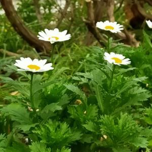 趣味どきっ! 花と暮らす #2「どんな場所でも器でも」~今回は平皿や鉢、ピッチャーなど意外なものを花器に見立てて花を飾るテクニックを伝える(12/11)