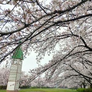 【期間限定無料公開】NHK語学講座 続かない原因と続ける方法38~最終回