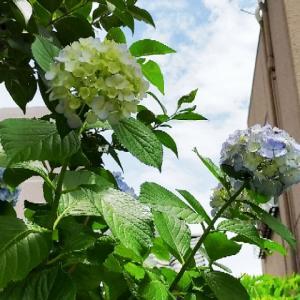 有吉のお金発見 突撃!カネオくん「進化する癒やしのアイテム!花のお金の秘密」(6/13)