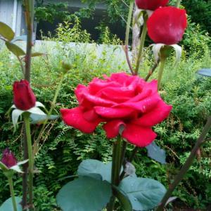 水無月6月19日誕生花(シニアの婚活は・・)