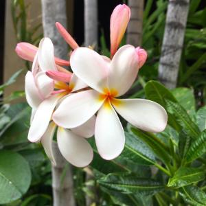 ハワイで発表された「規制緩和に向けた新たなルール」