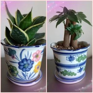 癒しの植物
