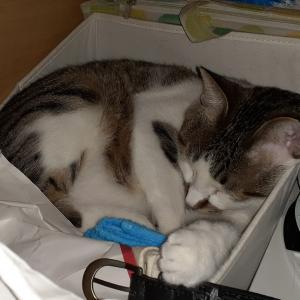 猫 お気に入りの場所