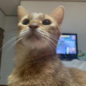 台風19号 猫警戒