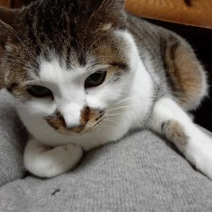 猫 見上げるように
