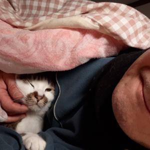 猫 一緒におやすみ