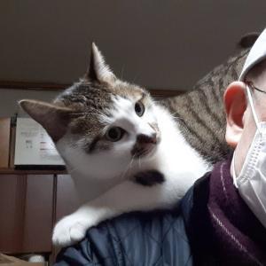 猫 愛情表現